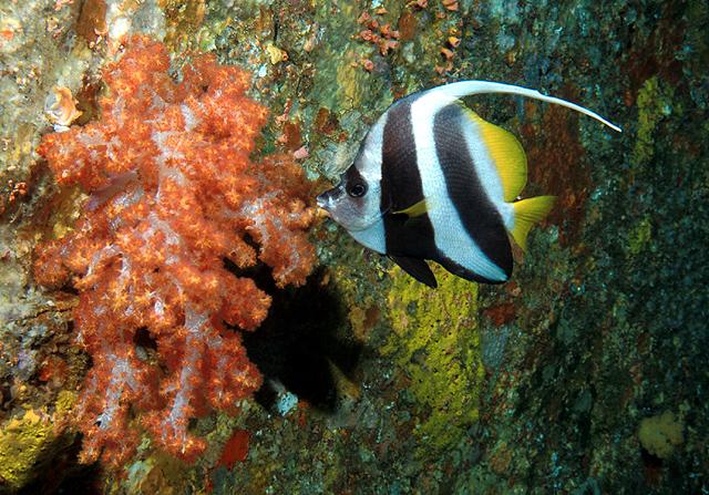 Banner Fish at West of Eden