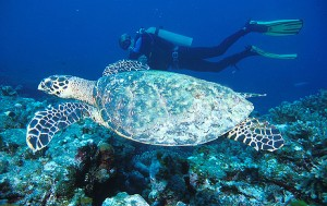 Golfo di Thailandia – Siti d'immersione