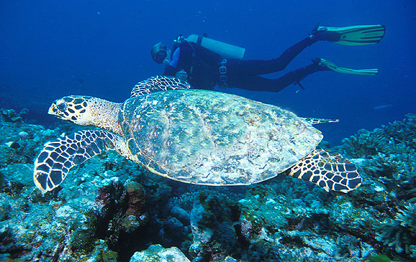 Similan Scuba Diving Site – Shark Fin Reef