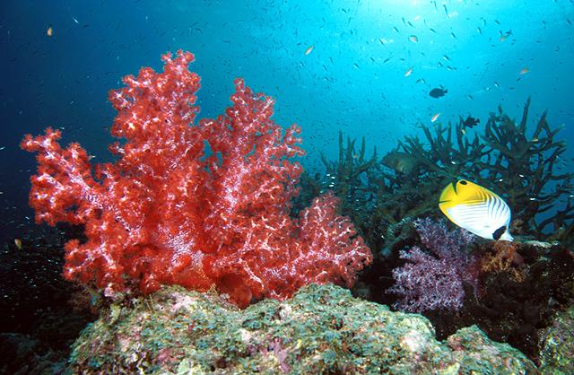 Breakfast Bend – Diving in Similan Islands